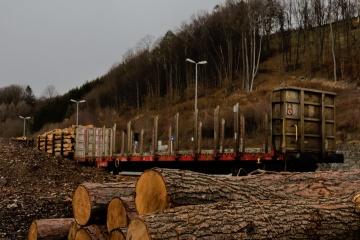 Holz im Bahnhof Traisen