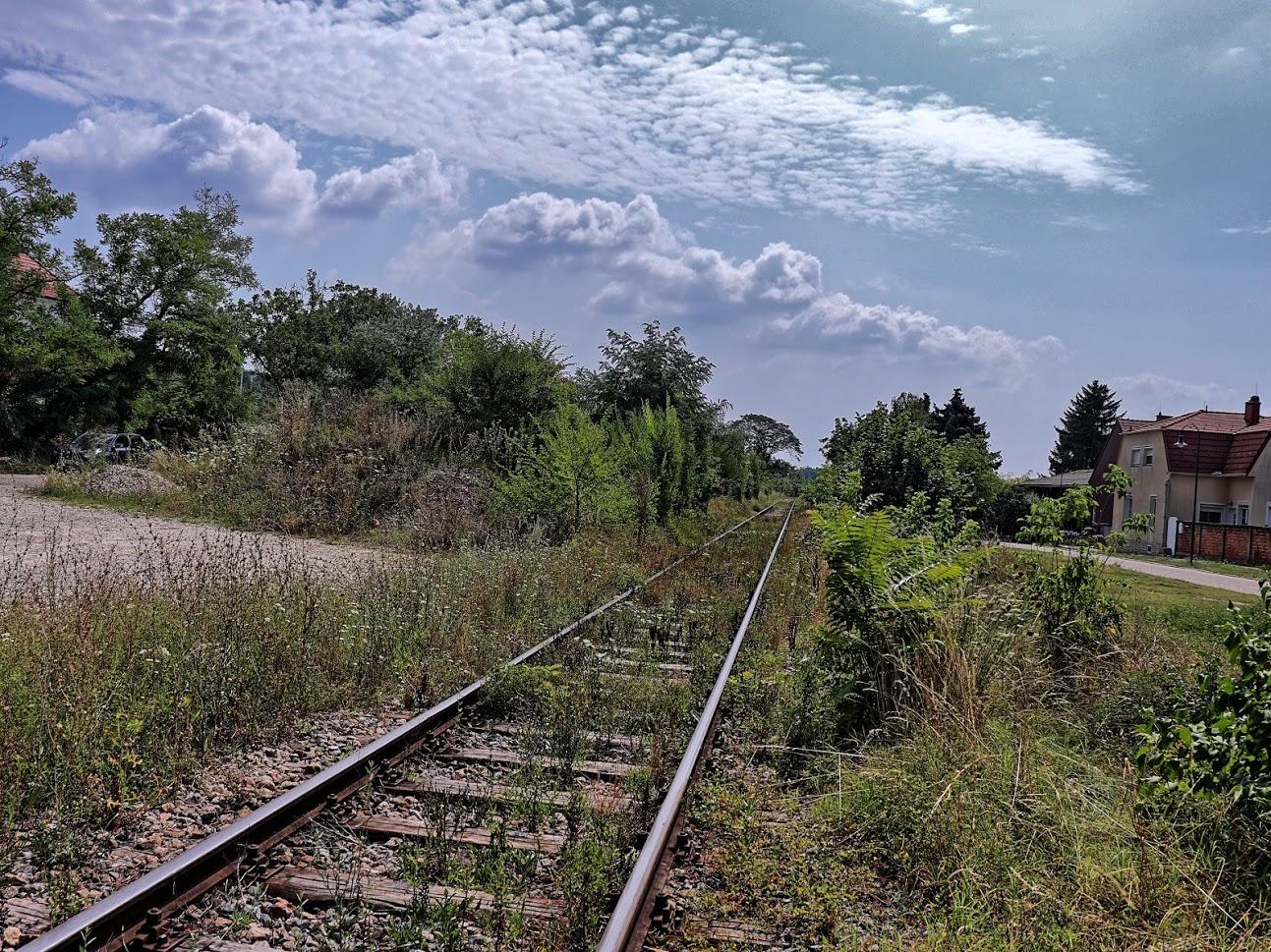 Verwachsene Gleise entlang des Schweinbarther Kreuz. Hier fahren tatsächlich noch Züge...